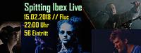 Spitting Ibex Live@Fluc / Fluc Wanne